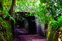Over the lane (richardsolway) Tags: cornwall scorrier redruth spanning path trees leaves mud lane woods countryside