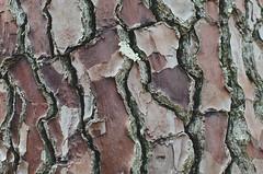 Wood (- m i l i e d e l -) Tags: 2016 april avril emiliedelmond france lubron miliedel photographe photographer photography adventure explore nikon nikonfr photo printemps somewhere spring wander