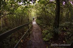 Trilha Macuco Safari (Stefan Lambauer) Tags: trilha caminhada trackparquenacionaldoiguau saltodomacuco macucosafari fozdoiguau paran nature floresta stefanlambauer 2016 brasil brazil santos sopaulo br