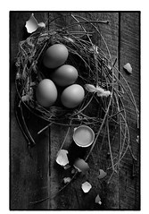 Top view of eggs in nest on dark vintage wooden background (bongkarnthanyakij) Tags: egg white brown rustic closeup dish meal natural copy spring nest wicker organic life symbol chicken breakfast farm old simple plank object basket wood easter healthy design color close shell ingredient wooden vintage background fresh board space nutrition health cooking nature food eating worn oak block raw