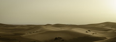 Merzouga Dunes, Sahara, Morocco (AndrooC) Tags: sand dunes morocco landscape camels panoramic sunrise sahara desert travel holiday