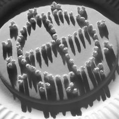 (Landanna) Tags: frenchknots embroidery embroideryonpaper embroideryonapaperplate broderi broderippapir broderippaptallerken borduren bordurenoppapier bordurenopeenpapierenbordje black bw white wit zwart zw sort hvid franskeknuder
