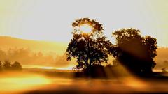good morning sunshine :-) (Wackelaugen) Tags: sunrise sun tree fog mist germany ray sunray canon eos photo photography wackelaugen googlies