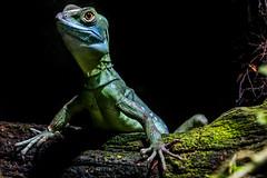 IMG_3349.jpg (uwe.lehmann) Tags: reptiliumlandau reptil animal animals reptilien tier tiere zoo