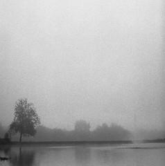 Morning Fog at the Pond (bclook) Tags: pentaconsixtl p6 biometar2880 fomapan fomapan400 bwfp bw schwarzweiss noiretblanc film analog istillshootfilm filmisnotdead