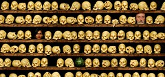 An Afternoon in the Manigotapi Ossuary (Studio d'Xavier) Tags: werehere skulladdicts skulls ossuary manigotapi nilpa bones 365 august292016 242366 yellow