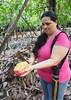 Cutting open the cacao pod, Finca de Cacao (little_duckie) Tags: minca bonda colombia southamerica finca cacao waterfall cascada jungle