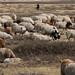 Sempre acompanhados de seus pastores