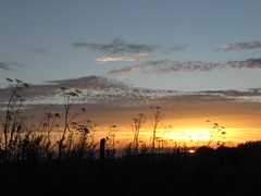 Silhouettes and sunset; field boundary on Watership Down (Flapjack Dave) Tags: sunset fenceline silhouette countryside cowparsley