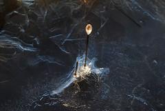 Ice Lantern (Saara Lindahl) Tags: ice reed wintern archipelago blue lantern finland espoo abstract art nikon frost