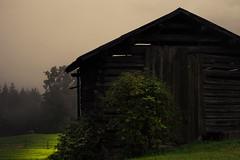 Lights (Netsrak) Tags: riezlern vorarlberg sterreich at htte mist fog nebel tree trees baum bume wald forst forest woods kleinwalsertal