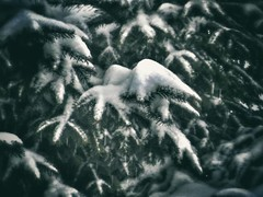 12568093_1504778049832076_2032644090_n (dragica_basaric) Tags: winter snow wonderland magic magical snowy flake nature green colours streets treet postcar postcards love train phot january 03 2016 photo photography d b danchy92 dragicabasaric lapovo serbia srbija srb sumadija dbphotography
