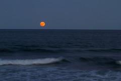 Full Moon on a Rolling Sea (brucetopher) Tags: moon waves night nightsky lunar red fullmoon full harvest orange sea ocean shore seashore seacoast coast coastal beach sand wave surf