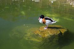 Aviario (Pablo Rodriguez M) Tags: valencia espaa spain acuario aquarium oceanogrfic aviario ave bird