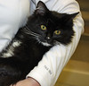 "Pet of the Week: Kittens, Kittens, Kittens! • <a style=""font-size:0.8em;"" href=""http://www.flickr.com/photos/42888877@N06/8603013434/"" target=""_blank"">View on Flickr</a>"