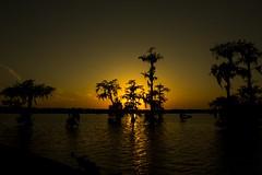 CypressSunset (tripod6720) Tags: sunset tree lafayette swamp cypress 20mmf28 canon60d