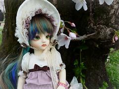 .:: Mi-Song ::. (Bunraku Doll) Tags: moon cute girl doll bjd 人形 resin elegant dollfie ai ch muñeca customhouse 인형 娃娃 かわいい 可愛い 女の子 misong multicoloredhair angeai cheonga
