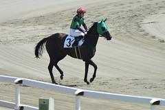 20130405-_DSC5553 (Fomal Haut) Tags: horse japan nikon nagoya 80400mm d4   14teleconverter  d800e
