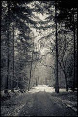 Path in the forest (derScheuch) Tags: leica trees bw white snow black film rollei analog forest geotagged path retro sw 100 analogue rodinal wald bume m6 schwarz nokton voigtlnder oldenburg 125 pfad niedersachsen weis agfarodinal agfaagfapanapx wildenloh film:iso=100 film:brand=agfa developer:brand=agfa developer:name=agfarodinal film:name=agfaagfapanapx100 filmdev:recipe=8544 geo:lat=5312297426926147 geo:lon=8117190599441528