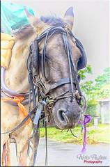 Horse - Caballo (Nstor Pugliese) Tags: horse caballo hdr
