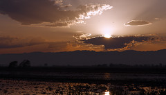 sunset (__JML__) Tags: naturaleza nature water rio river agua nikon delta natura catalonia silence catalunya ebro aigua catalua silencio riu silenci deltebre ebre jml rememberthatmomentlevel1 rememberthatmomentlevel2 rememberthatmomentlevel3