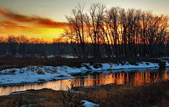 Setting Sun Ignites Water (Prayers for the Boston Marathon Bombing Victims) (LostMyHeadache: Absolutely Free *) Tags: trees winter light sunset snow love nature water grass birds animals silhouette canon reflections river fire hope evening geese twilight peace dusk ducks shore davidsmith calgaryalbertacanada eos60d prayersforthebostonmarathonbombingvictims