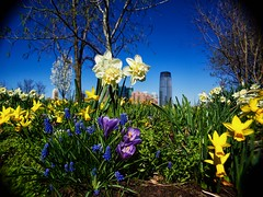 Day 107 My City (chris langston photography) Tags: flowers grass skyline newjersey spring jerseycity wideangle bluesky olympus nik fujinon manualfocus 125mm omd day107 mycity libertystatepark manuallens em5 365project cmountlens colorefexpro2 micro43rd
