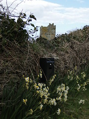 Ballyteige Castle (gowersaint) Tags: ireland sky irish castle nature wall clouds rural countryside spring war peace natural farm seasonal ivy lane april romantic letterbox fortification wexford defence daffodils defences towerhouse ballyteigecastle