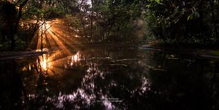 螢火蟲。牛伯伯蝴蝶園區 Fireflies , Taiwan _IMG_6430313233343536373840