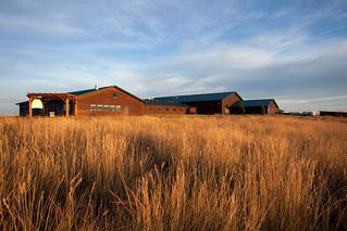 South Dakota Pheasant Hunt - Pierre 13