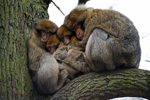 Trentham Monkey Forest 23/02/2013