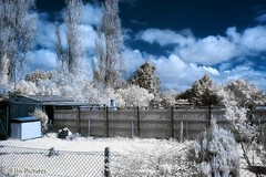 Neighbours Garden in Infrared (Ellis Pictures) Tags:
