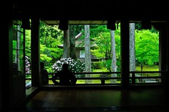 The season of fresh green, Kyoto Sanzen-in (yinlei) Tags: green garden spring kyoto   sanzenin