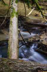 Outside Is Where I Want To Be (SimplyAmy74) Tags: longexposure trees outdoors heaven pacificnorthwest streams washingtonstate longshutter naturewalk smoothwater newmanlake