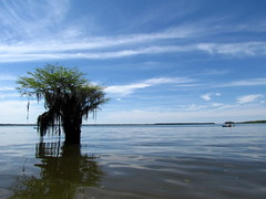 Lowcountry Unfiltered - Lake Marion Ghost Town Paddle - April 2013 (265) (greenkayak73) Tags: friends beagle nature america fun lucy southcarolina adventure kayaking ghosttown mrrussell riverdog lakemarion greenkayak73 randomconnections photopaddling lowcountryunfiltered nitrorev johnatgcc rockscemetery