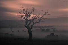 Valley of Mist (.Brian Kerr Photography.) Tags: longexposure mist tree canon cumbria penrith morningmist edenvalley leefilters canoneos5dmkii leebigstopper