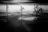 CGI Landscape (Steve A Johnson) Tags: monochrome 3d surreal bryce cgi