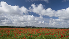 Nuages et coquelicots *----+ (Titole) Tags: clouds poppies field titole nicolefaton sky