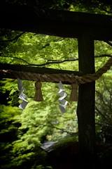 Nonomiya -  ( Ogawasan) Tags: japan japon shinto shrine torii  kyoto