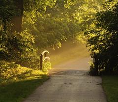 Sidewalk Glow (Tiara Rae Photography) Tags: sidewalk glow haze sunset sun beams sunbeams light golden nebraska omaha zorinsky lake path