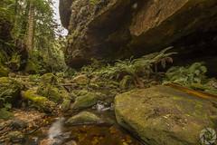 Grand Canyon Walk (pradeep2471989) Tags: bushwalking grandcanyonwalk blackheath australia naturelandscape naturewalk hikingtrail landscapephotography