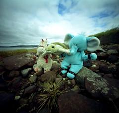 Late for Tea (wheehamx) Tags: pinhole soft toy adventure