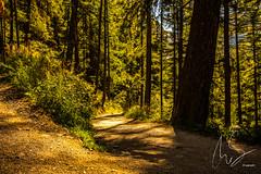 IMG_20160826_C700D_005HDR.jpg (Samoht2014) Tags: lrchenwald schweiz wald wallis wanderweg zermatt