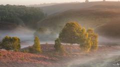 Morning light on the heath (BraCom (Bram)) Tags: bracom landscape landschap mist fog morning ochtend trees bomen hills heuvels heath hei nature natuur rheden posbank gelderland nederland netherlands holland canoneos5dmkiii widescreen canon 169 canonef24105mm bramvanbroekhoven nl