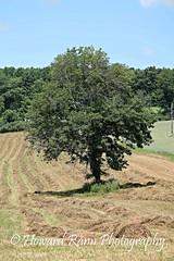 Pennsylvania Countryside (Framemaker 2014) Tags: farm field meadow tree hay endless mountains unityville pennsylvania montour county united states america