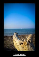 L'orizzonte dietro a un tronco