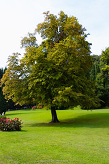 A big tree in Sigurt (Eleonora Cacciari) Tags: parcogiardinosigurt eos1200d eleonoracacciari ecacciari canon canoneos1200d veneto parco park garden tree albero green ilovegreen natura nature grass erba verdino
