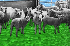 Miss playing minecraft and being 13 (danasychugova) Tags: sheep collage blackandwhite art inspiration game digital minecraft