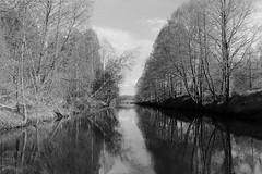 untitled (Anton Zabermach) Tags: nikonfe2 nikkor 35mmf2d film analog 35mm bw blackandwhite rolleirpx landscape nature reflection selfdeveloped microphen