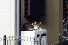 Today's Cat@2016-09-15 (masatsu) Tags: cat thebiggestgroupwithonlycats catspotting pentax mx1